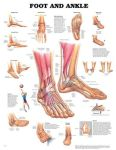 The Foot & Ankle Chart